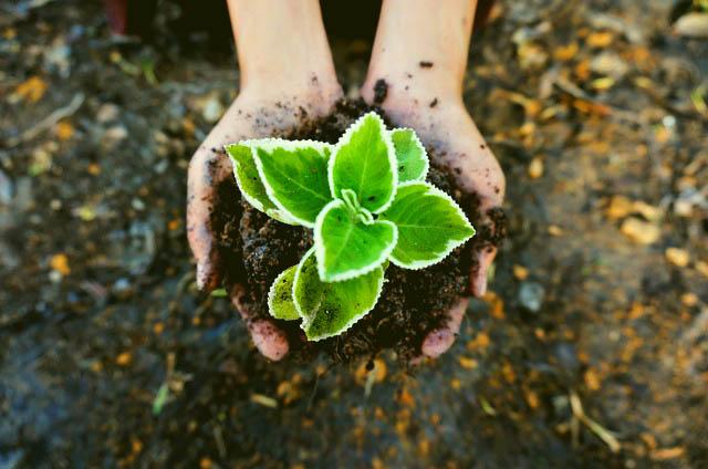 Plant dat groeit: omzetverhoging