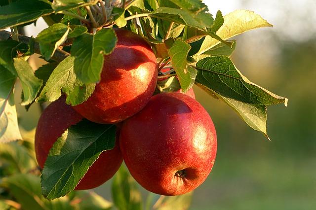 Telefonische acquisitie uitbesteden: appels aan boom